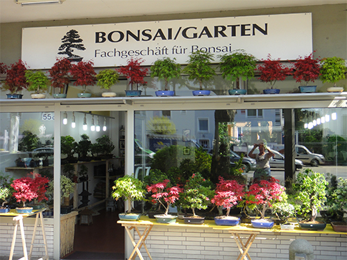 bonsai baum garten, bonsai garten wolf tunnat, Design ideen